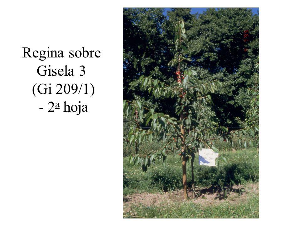 Regina sobre Gisela 3 (Gi 209/1) - 2a hoja