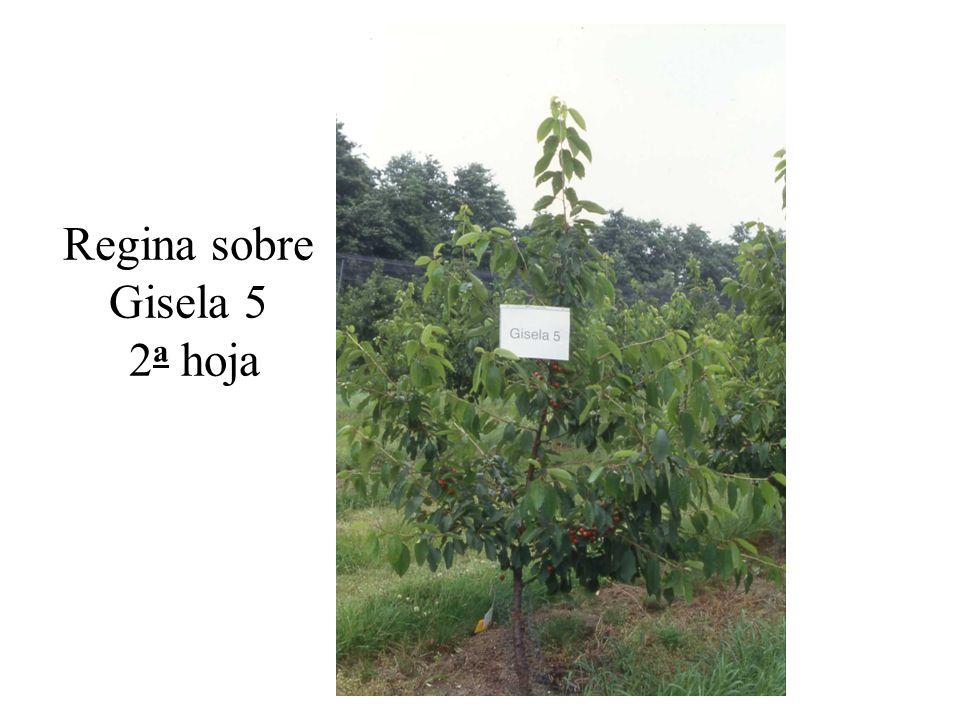 Regina sobre Gisela 5 2a hoja