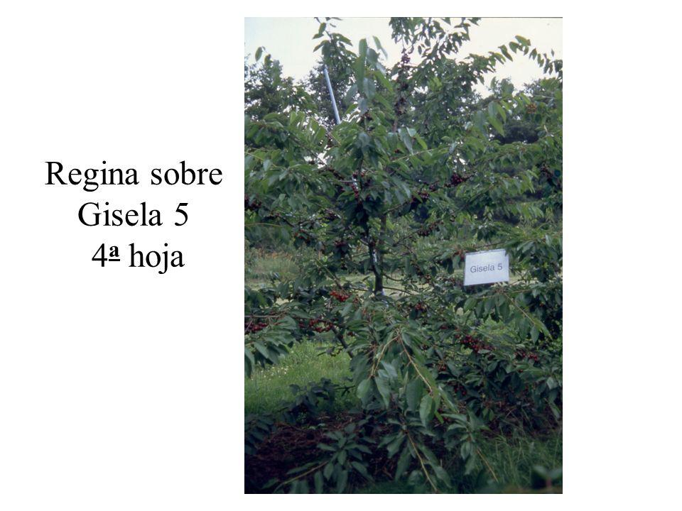Regina sobre Gisela 5 4a hoja