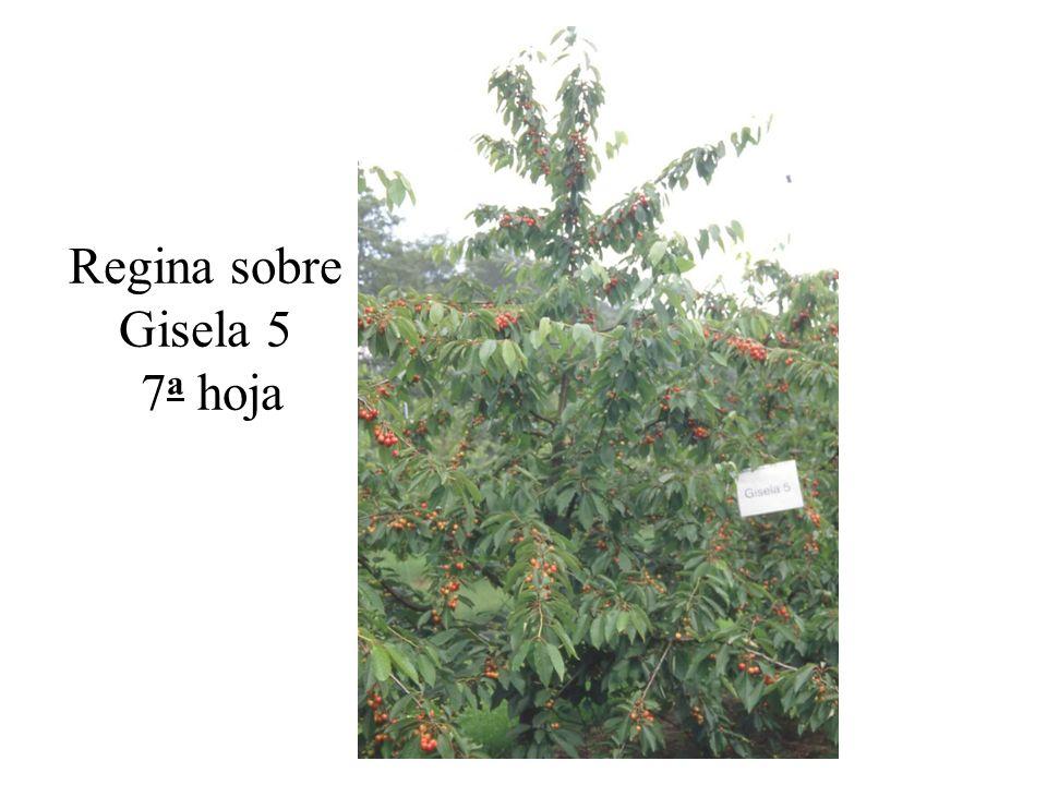 Regina sobre Gisela 5 7a hoja