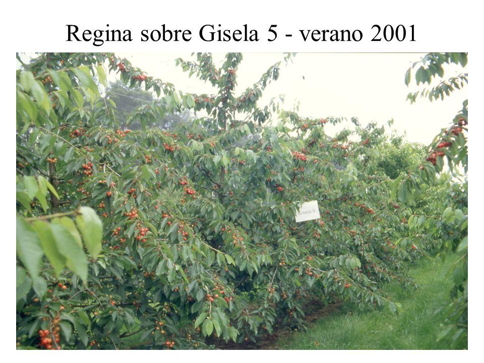 Regina sobre Gisela 5 - verano 2001