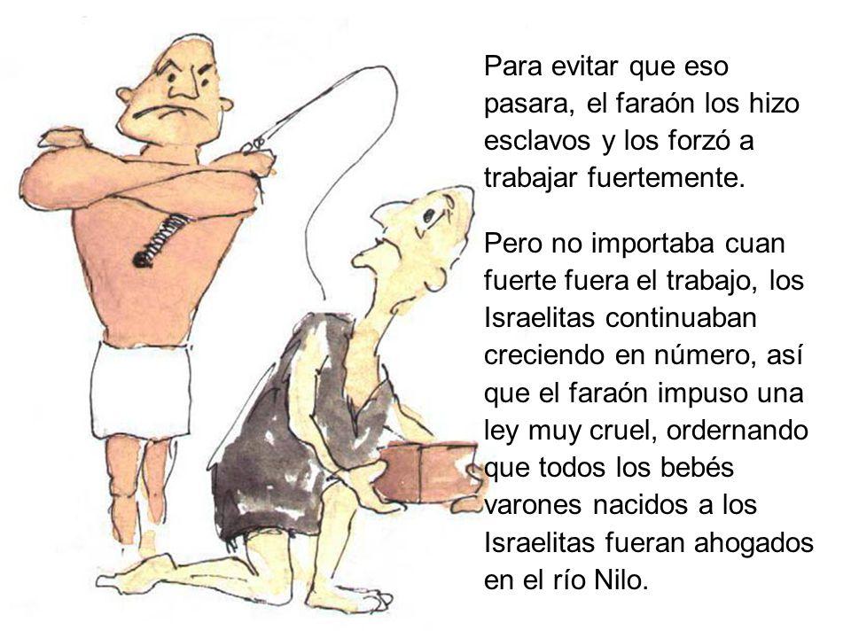 Para evitar que eso pasara, el faraón los hizo esclavos y los forzó a trabajar fuertemente.