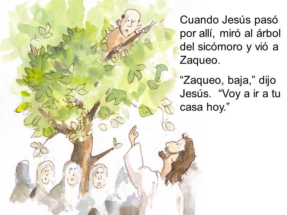 Cuando Jesús pasó por allí, miró al árbol del sicómoro y vió a Zaqueo.