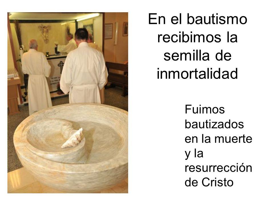 En el bautismo recibimos la semilla de inmortalidad