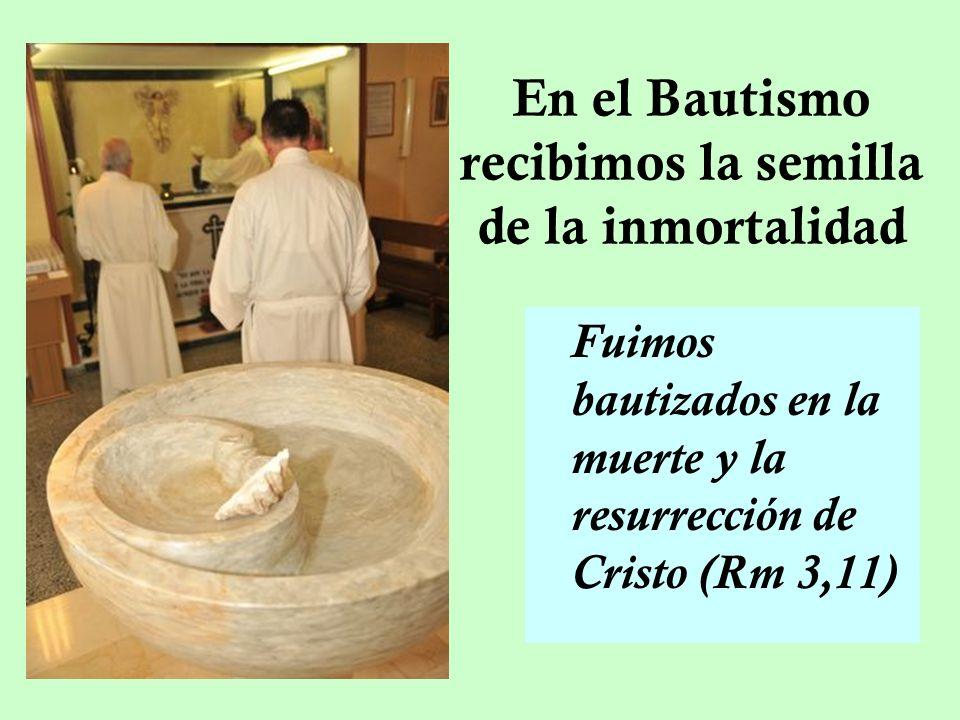 En el Bautismo recibimos la semilla de la inmortalidad