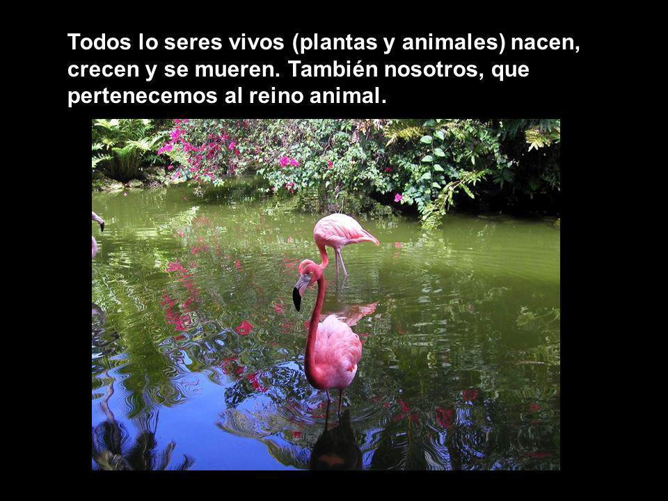 Todos lo seres vivos (plantas y animales) nacen, crecen y se mueren