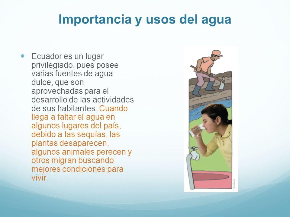 Importancia y usos del agua