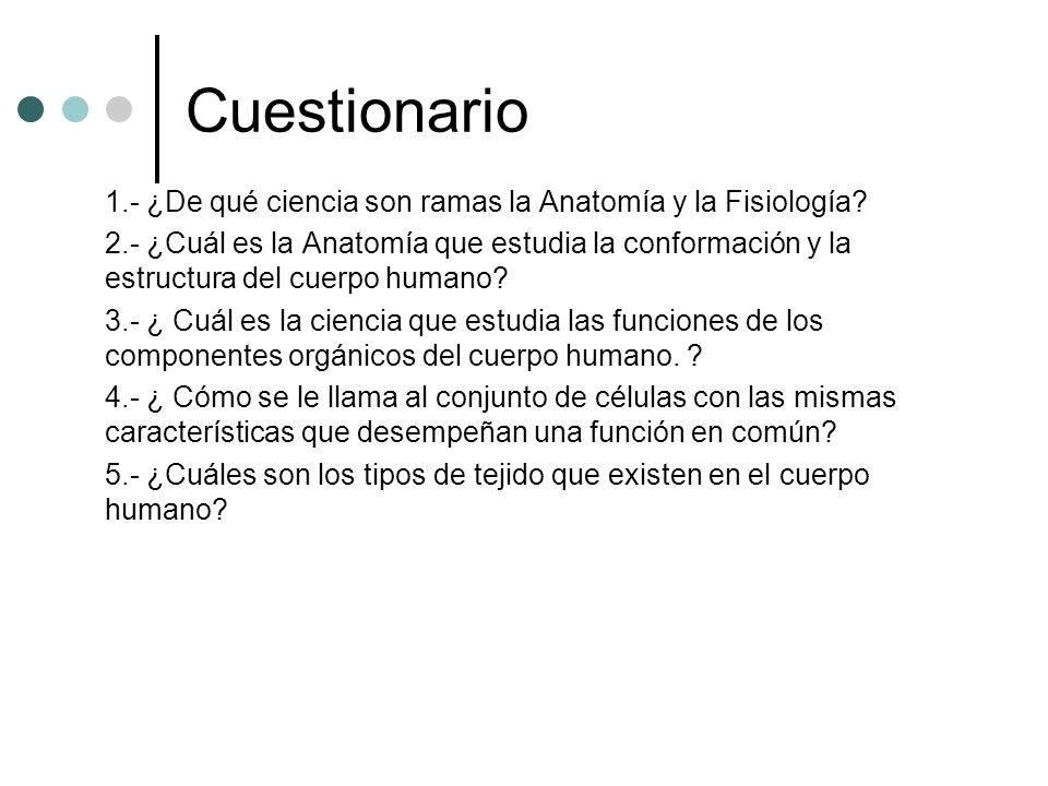 Lujo Tejido De La Anatomía Y La Fisiología Cuestionario Elaboración ...