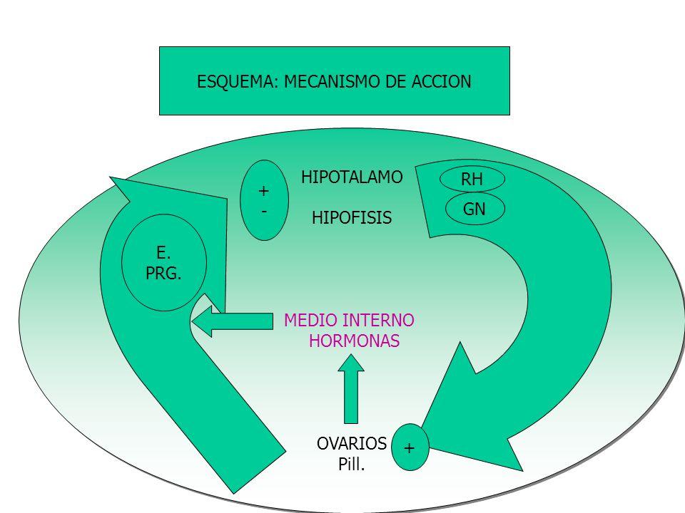 ESQUEMA: MECANISMO DE ACCION