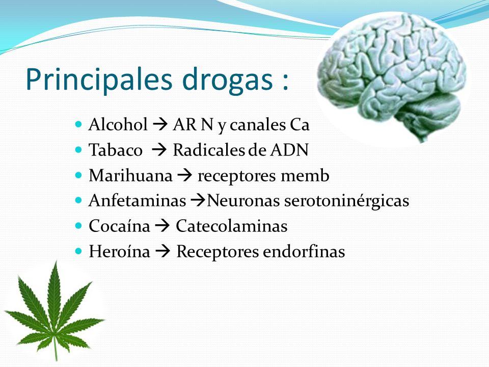 Principales drogas : Alcohol  AR N y canales Ca