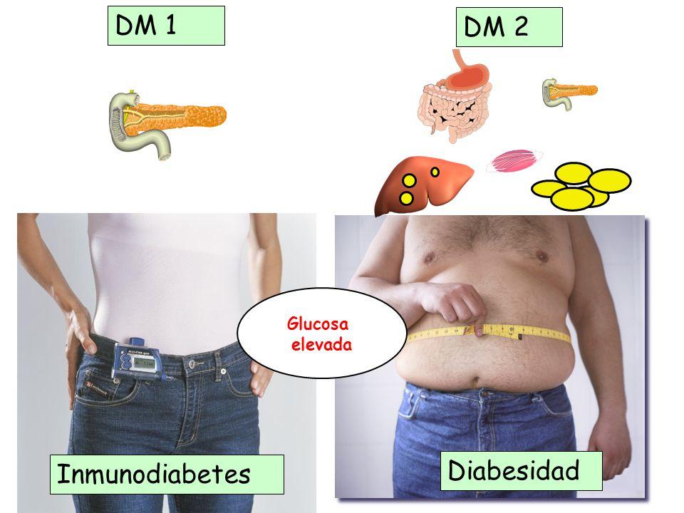 DM 1 DM 2 Glucosa elevada Inmunodiabetes Diabesidad 7 7