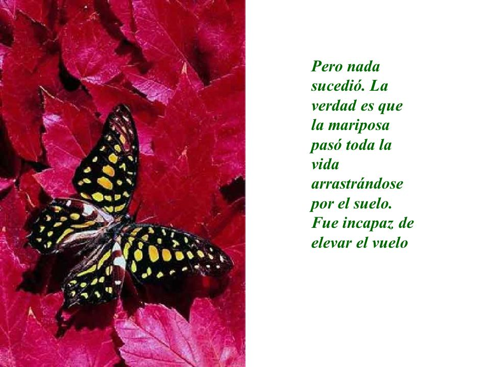 Pero nada sucedió. La verdad es que la mariposa pasó toda la vida arrastrándose por el suelo.