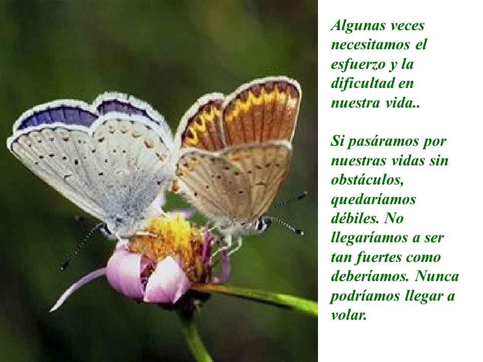 Algunas veces necesitamos el esfuerzo y la dificultad en nuestra vida..