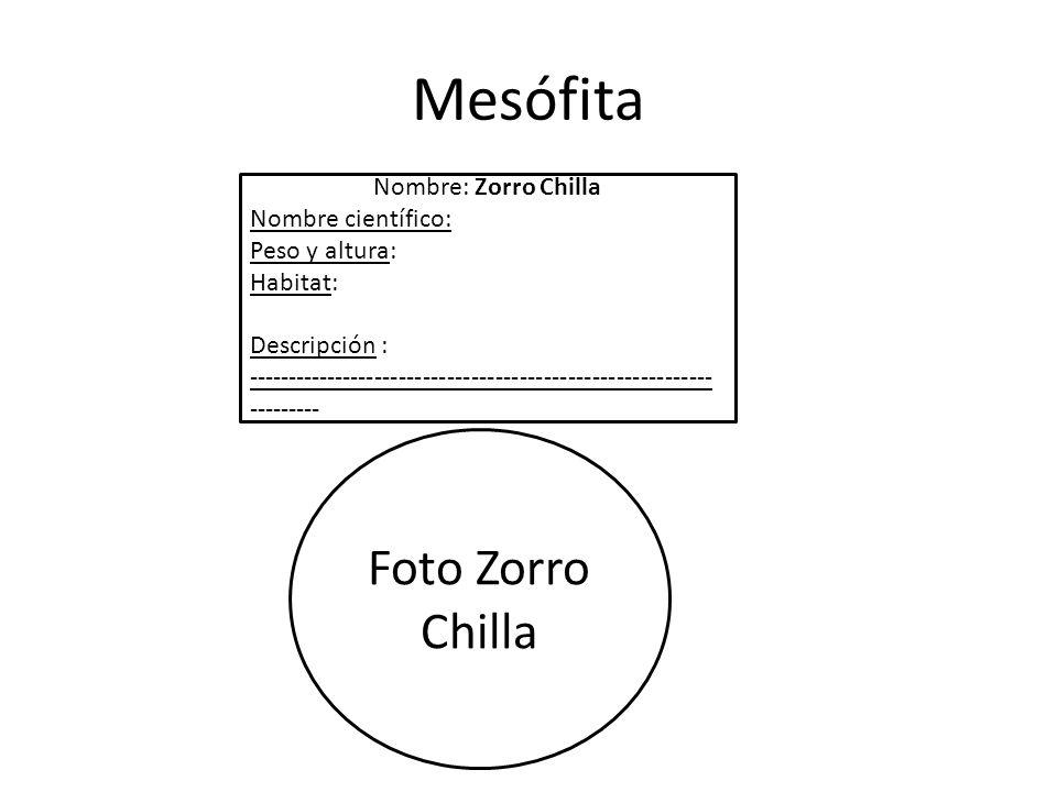 Mesófita Foto Zorro Chilla Nombre: Zorro Chilla Nombre científico:
