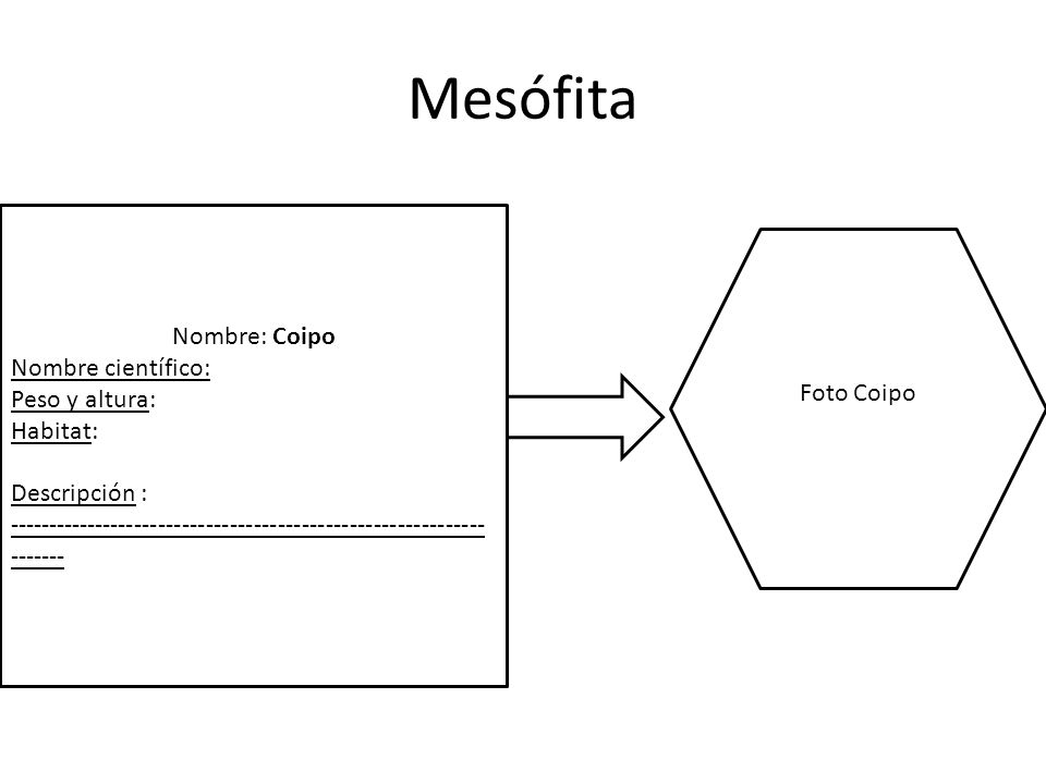 Mesófita Nombre: Coipo Nombre científico: Peso y altura: Foto Coipo