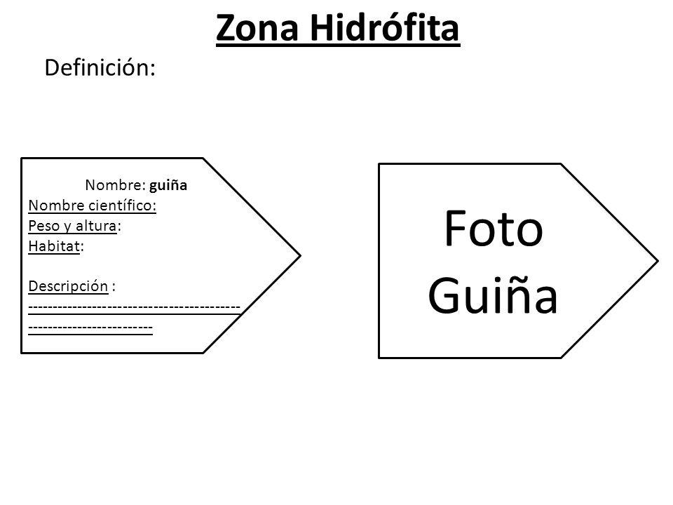 Zona Hidrófita Definición: