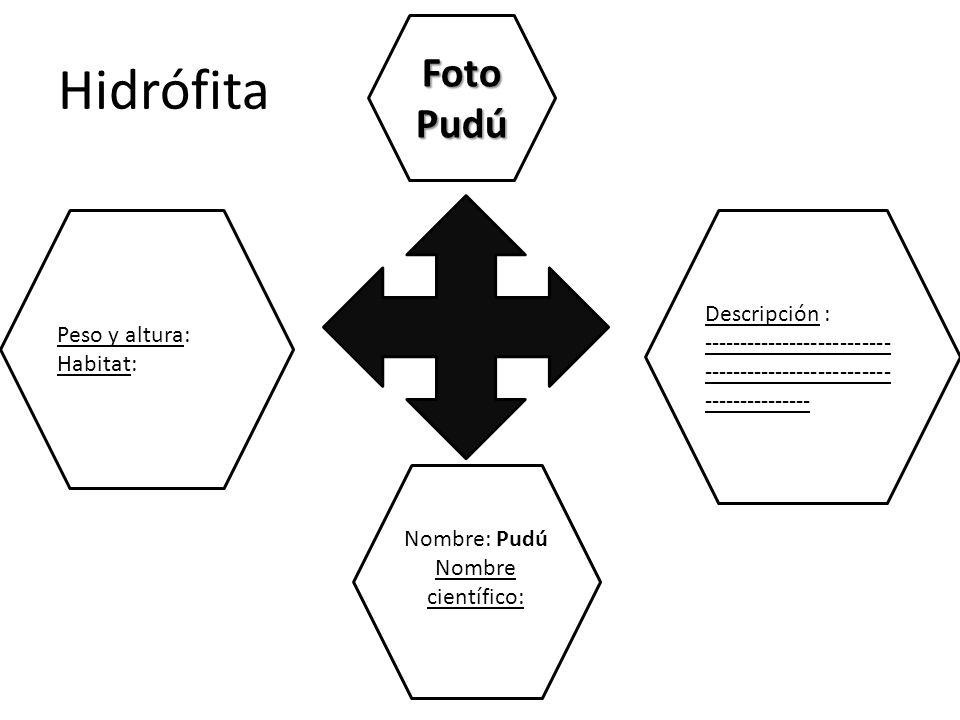 Hidrófita Foto Pudú Descripción : Peso y altura: