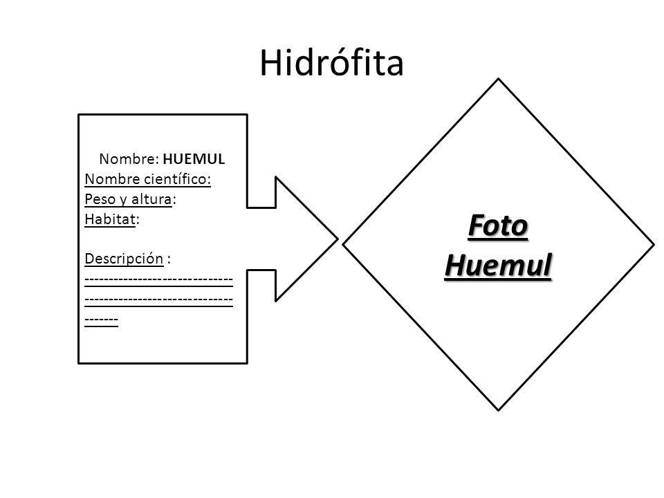 Hidrófita Foto Huemul Nombre: HUEMUL Nombre científico: Peso y altura:
