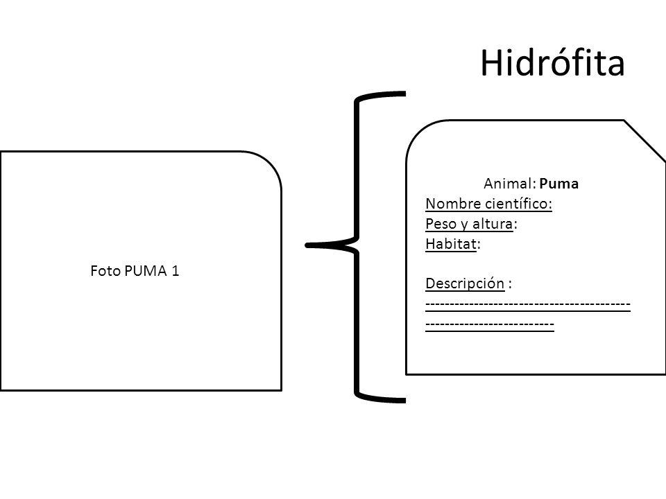 Hidrófita Animal: Puma Nombre científico: Peso y altura: Habitat: