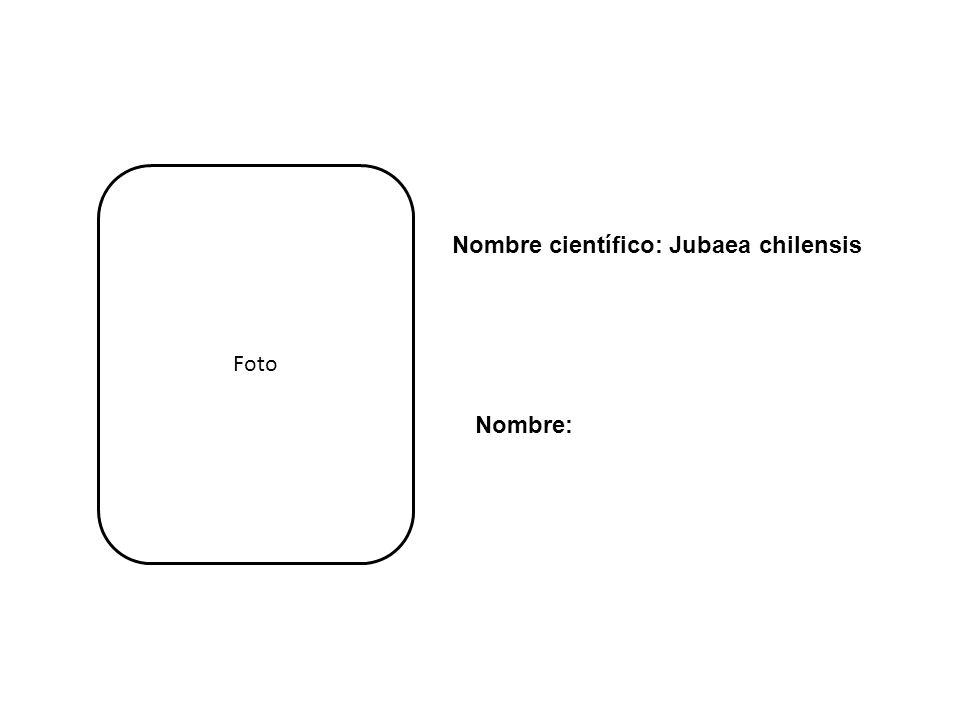 Foto Nombre científico: Jubaea chilensis Nombre: