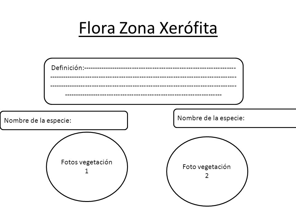 Flora Zona Xerófita