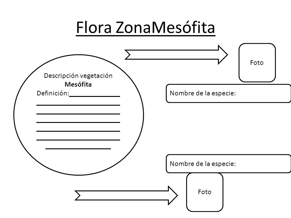 Descripción vegetación Mesófita