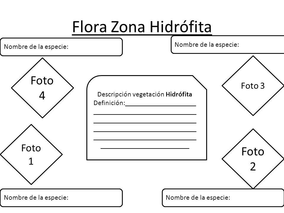 Descripción vegetación Hidrófita