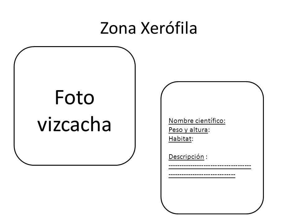 Foto vizcacha Zona Xerófila Nombre científico: Peso y altura: Habitat:
