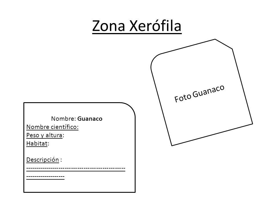 Zona Xerófila Foto Guanaco Nombre: Guanaco Nombre científico: