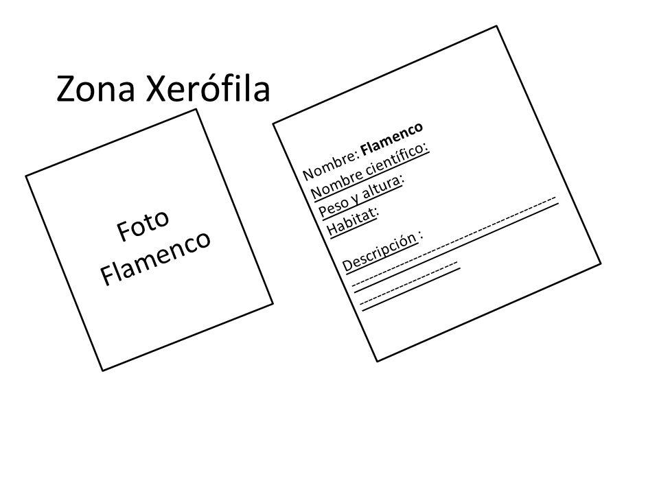 Zona Xerófila Foto Flamenco Nombre: Flamenco Nombre científico: