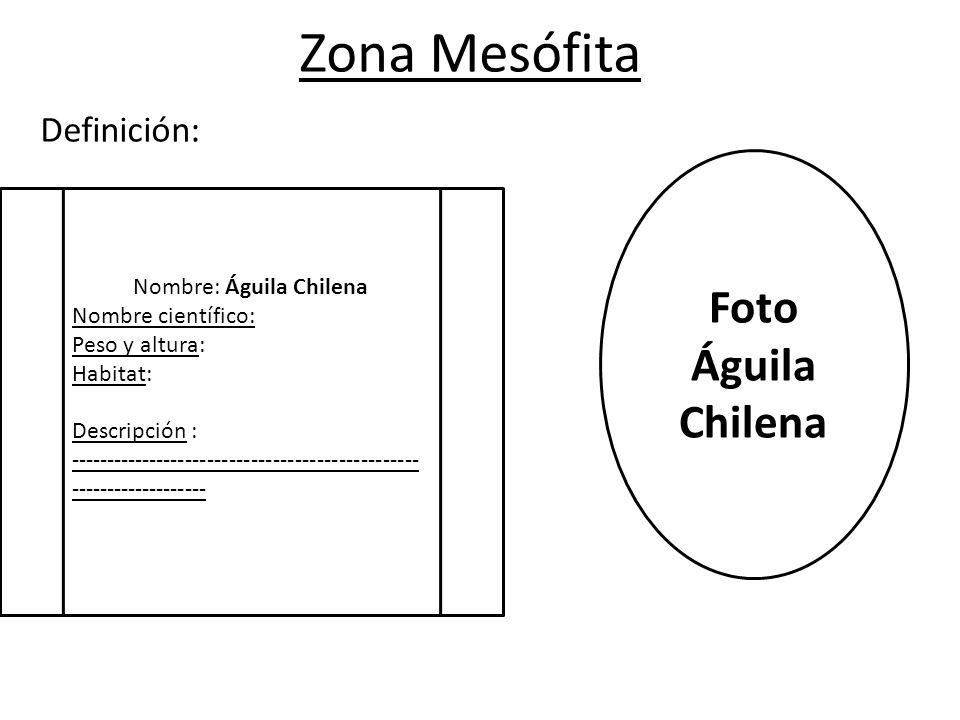 Zona Mesófita Definición: