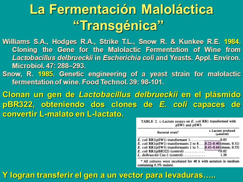 La Fermentación Maloláctica Transgénica
