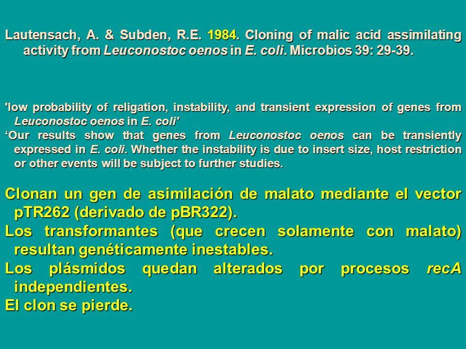 Los plásmidos quedan alterados por procesos recA independientes.