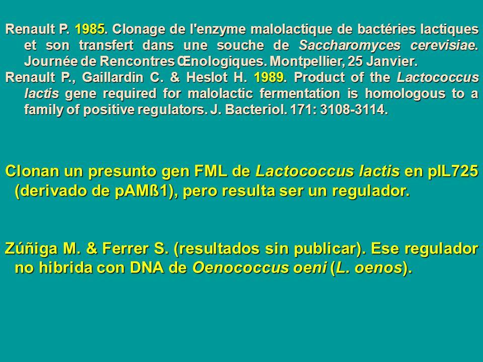 Renault P. 1985. Clonage de l enzyme malolactique de bactéries lactiques et son transfert dans une souche de Saccharomyces cerevisiae. Journée de Rencontres Œnologiques. Montpellier, 25 Janvier.