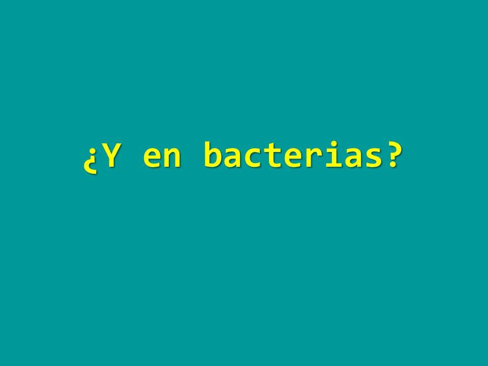 ¿Y en bacterias