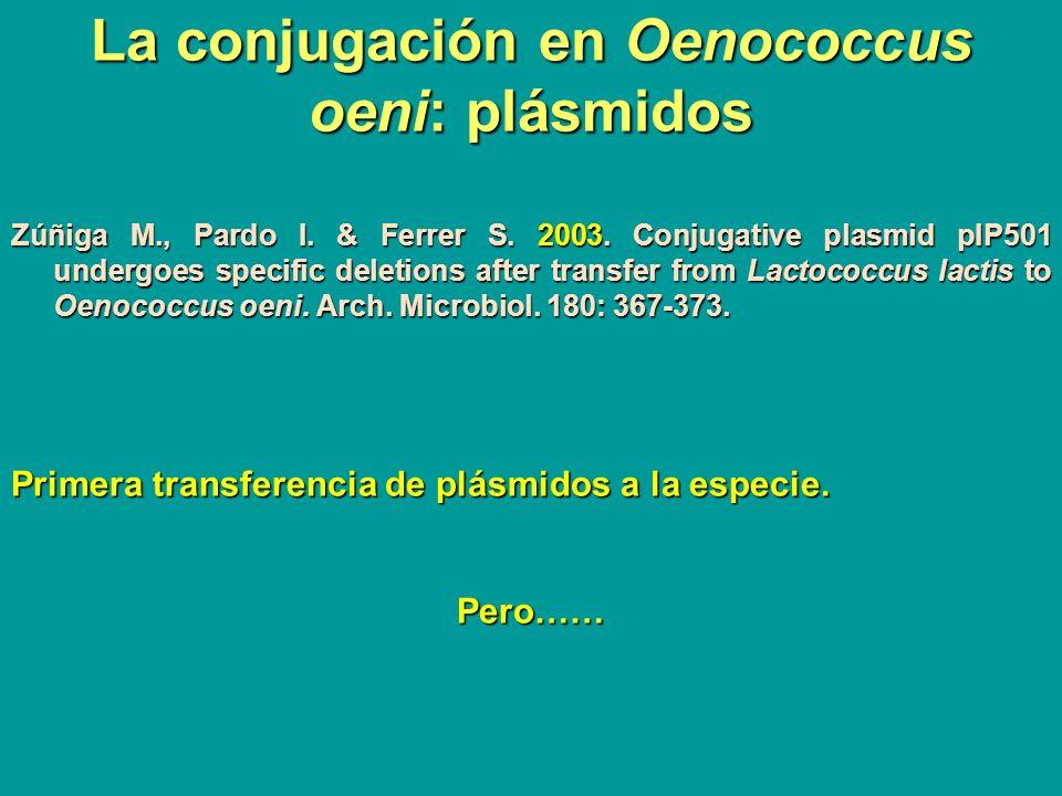 La conjugación en Oenococcus oeni: plásmidos