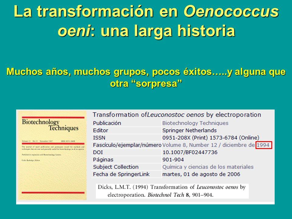 La transformación en Oenococcus oeni: una larga historia