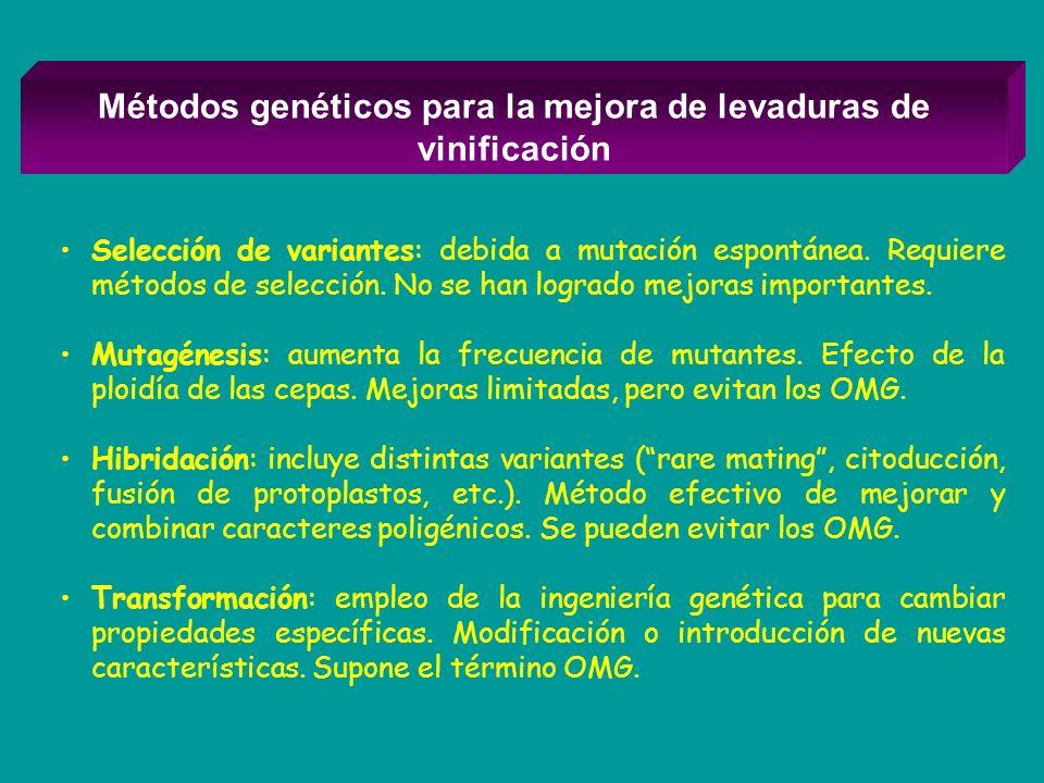 Métodos genéticos para la mejora de levaduras de vinificación