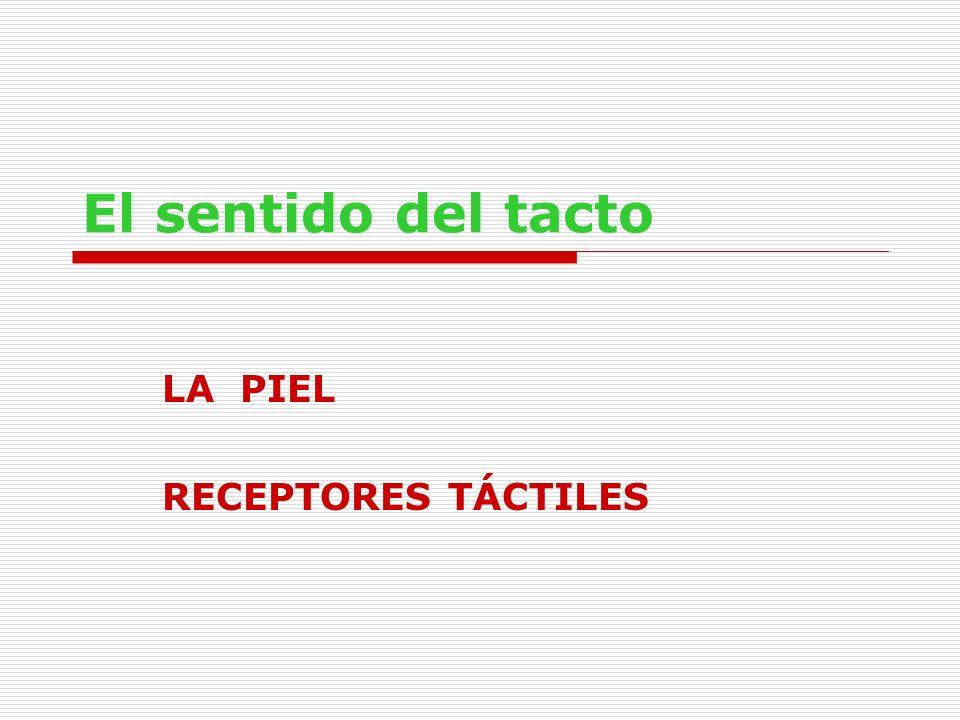 LA PIEL RECEPTORES TÁCTILES