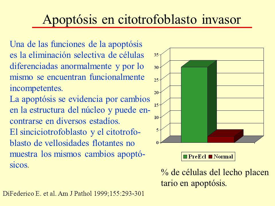 Apoptósis en citotrofoblasto invasor