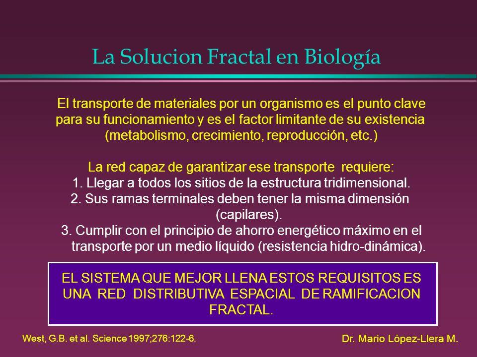La Solucion Fractal en Biología