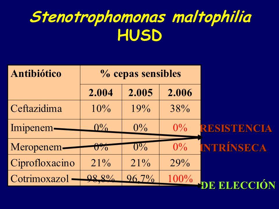 Stenotrophomonas maltophilia HUSD