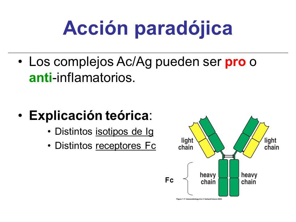 Acción paradójica Los complejos Ac/Ag pueden ser pro o anti-inflamatorios. Explicación teórica: Distintos isotipos de Ig.