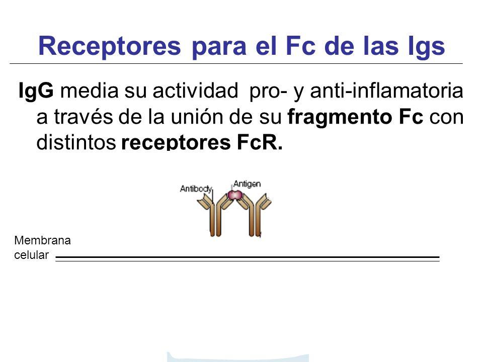 Receptores para el Fc de las Igs