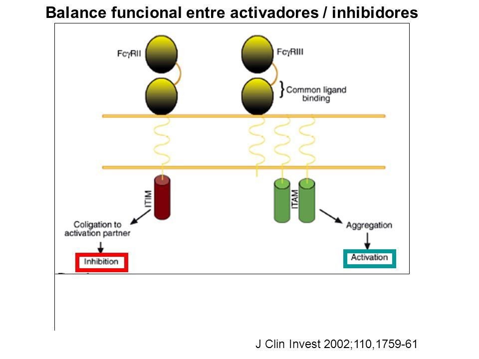 Balance funcional entre activadores / inhibidores