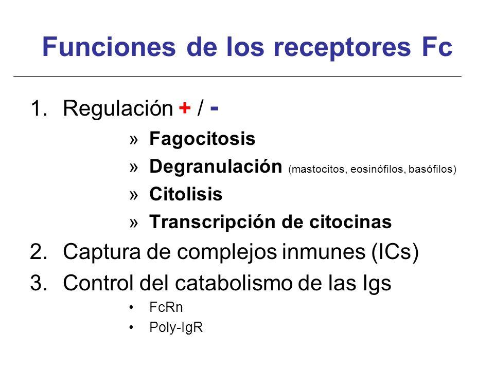 Funciones de los receptores Fc