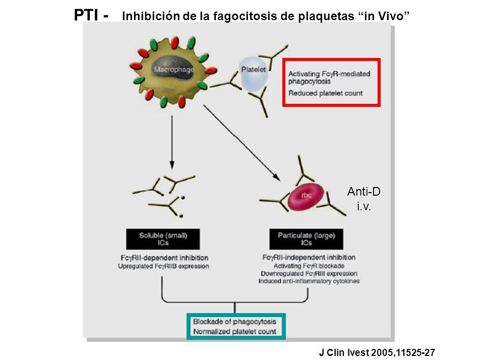 PTI - Inhibición de la fagocitosis de plaquetas in Vivo