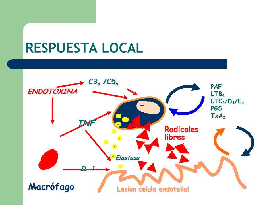 RESPUESTA LOCAL Macrófago TNF Radicales libres C3a /C5a ENDOTOXINA