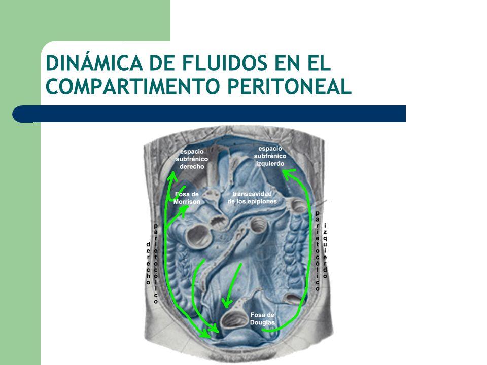 DINÁMICA DE FLUIDOS EN EL COMPARTIMENTO PERITONEAL