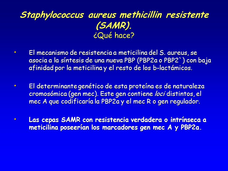Staphylococcus aureus methicillin resistente (SAMR). ¿Qué hace